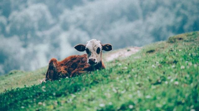 Salvar o planeta passa por comer menos carne